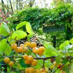 Ecoidea bologna manutenzione e servizi per giardino for Alberi frutta vendita