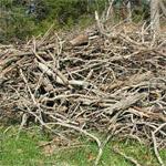 Ecoidea bologna manutenzione e servizi per giardino for Rami secchi da arredo